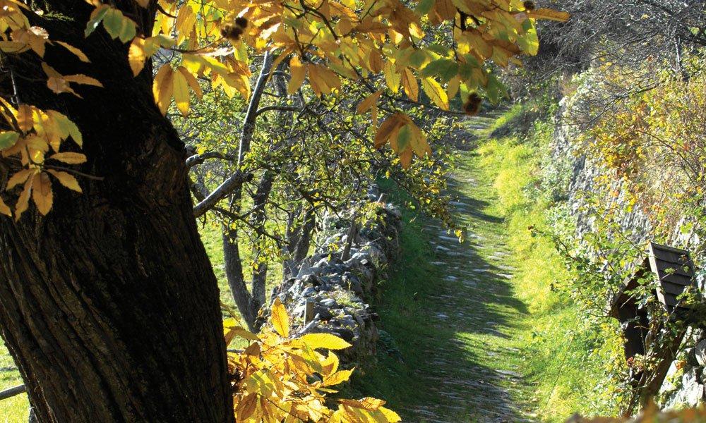 Herbsturlaub auf dem Bauernhof in Südtirol